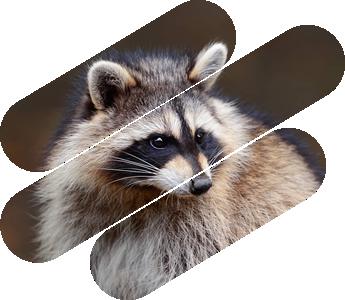 Humane Animal Control | All Wildlife Removal Inc